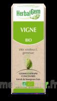 Herbalgem Vigne Macérat bio 30ml