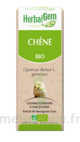 Herbalgem Chêne Macérat bio 30ml à DURMENACH